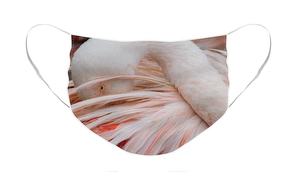 Flamingo Face Mask featuring the photograph Resting Flamingo by Lkb Art And Photography