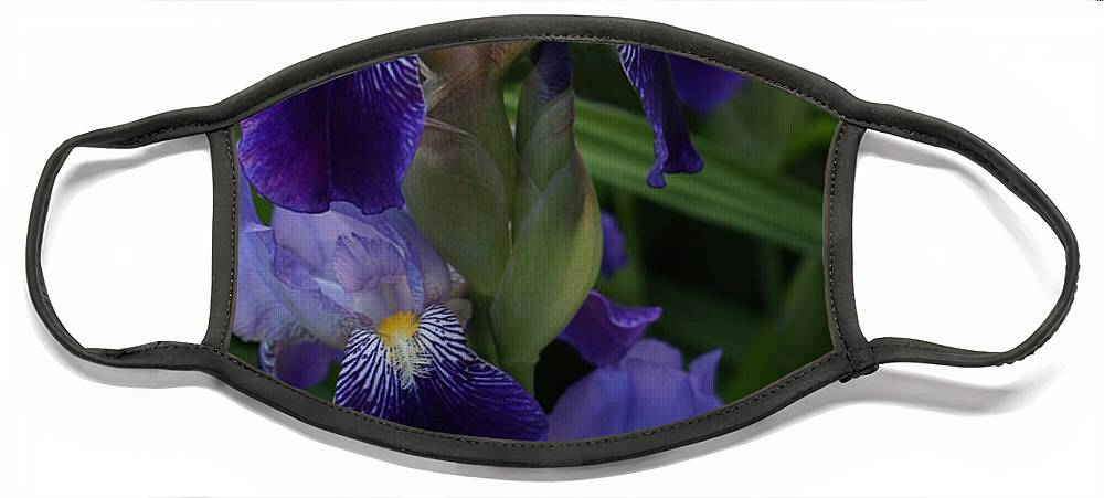 Iris Face Mask featuring the photograph Royal Purple Iris's by Jo Smoley