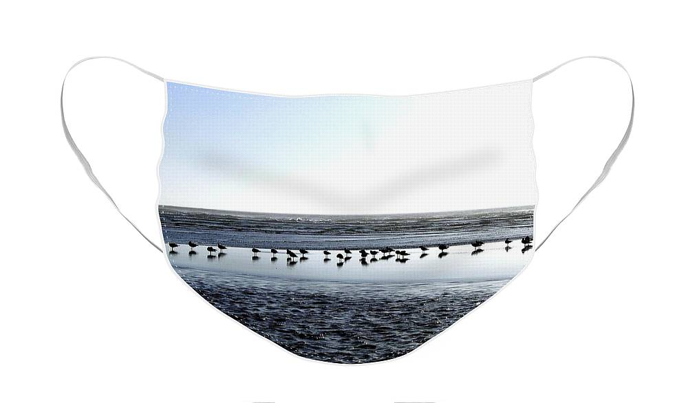 Seagulls Face Mask featuring the photograph Seagulls On A Sandbar by Will Borden