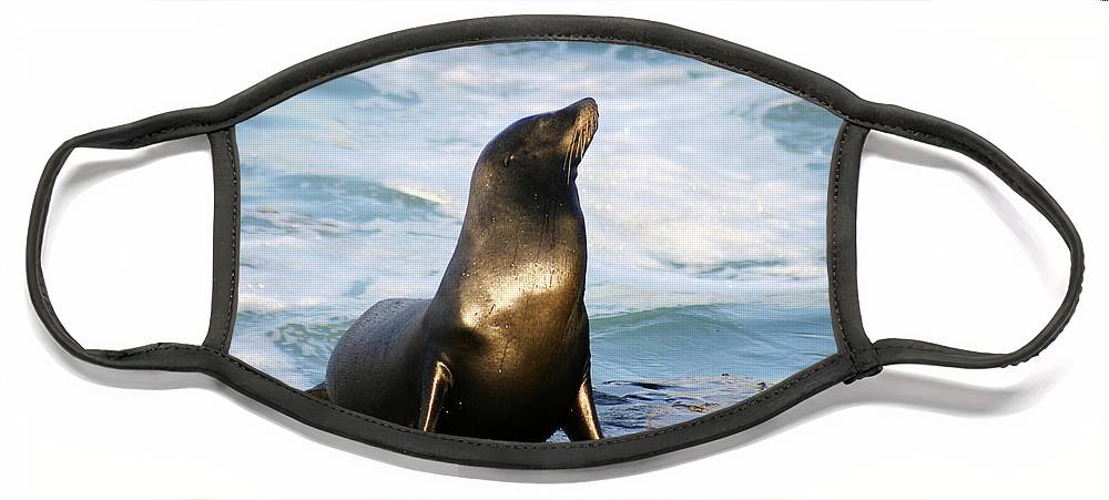 Sealion Face Mask featuring the photograph Sealion by Anthony Jones