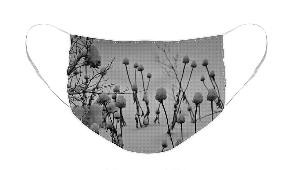 Snow Face Mask featuring the photograph Snow Covered Coneflowers by Teresa Mucha
