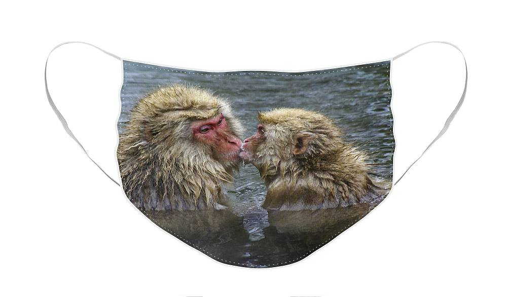 Snow Monkey Face Mask featuring the photograph Snow Monkey Kisses by Michele Burgess