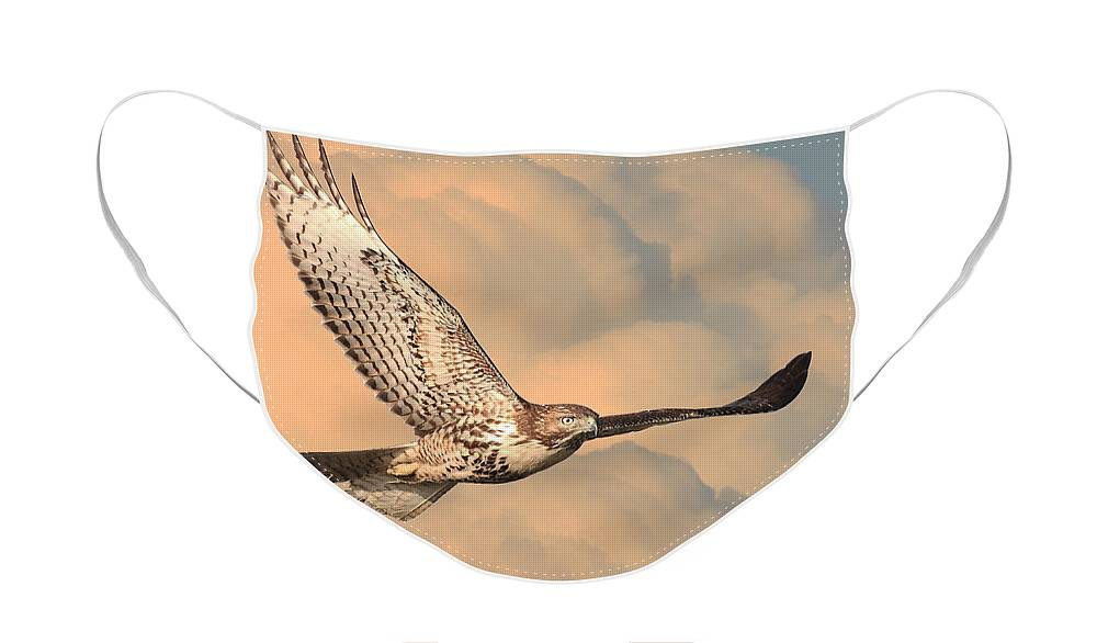 Wingsdomain Face Mask featuring the photograph Soaring Hawk by Wingsdomain Art and Photography