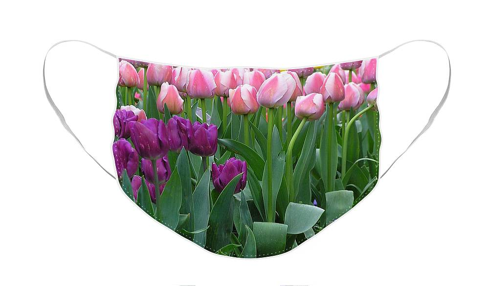 Tulips Face Mask featuring the photograph Spring Colors by Louise Magno