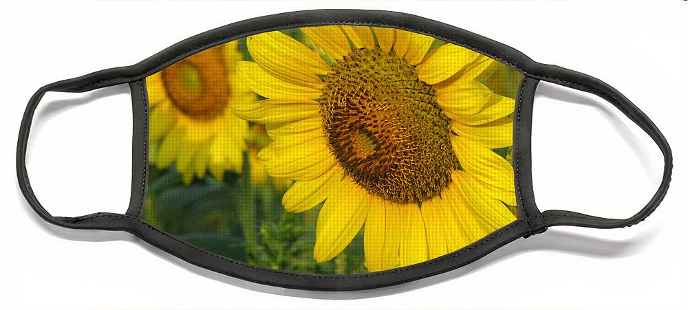 Sunflowers Face Mask featuring the photograph Sunflower series by Amanda Barcon