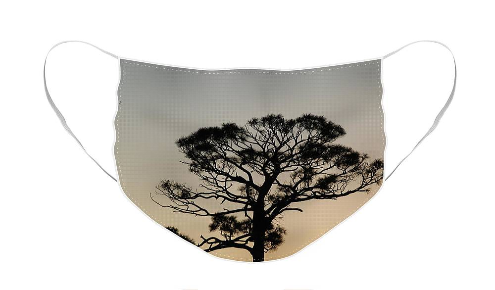 Tree Face Mask featuring the photograph Sunsetting Thru The Trees by Rob Hans
