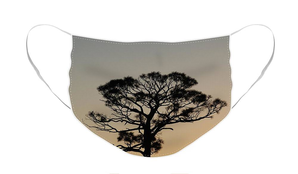 Tree Face Mask featuring the photograph Sunsetting Trees by Rob Hans