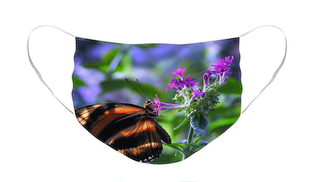 Butterfly Face Mask featuring the photograph Sweet Nector by Louise Magno