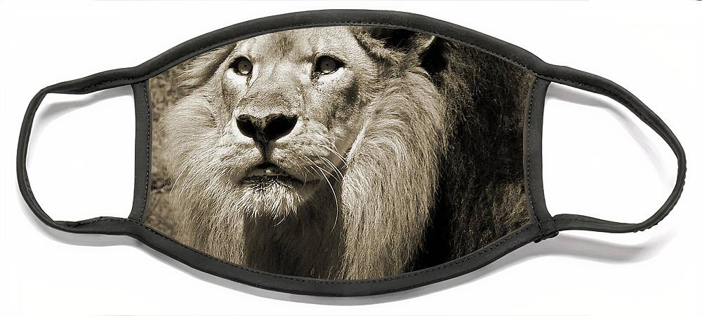 Lion Face Mask featuring the photograph The King II by Steven Sparks