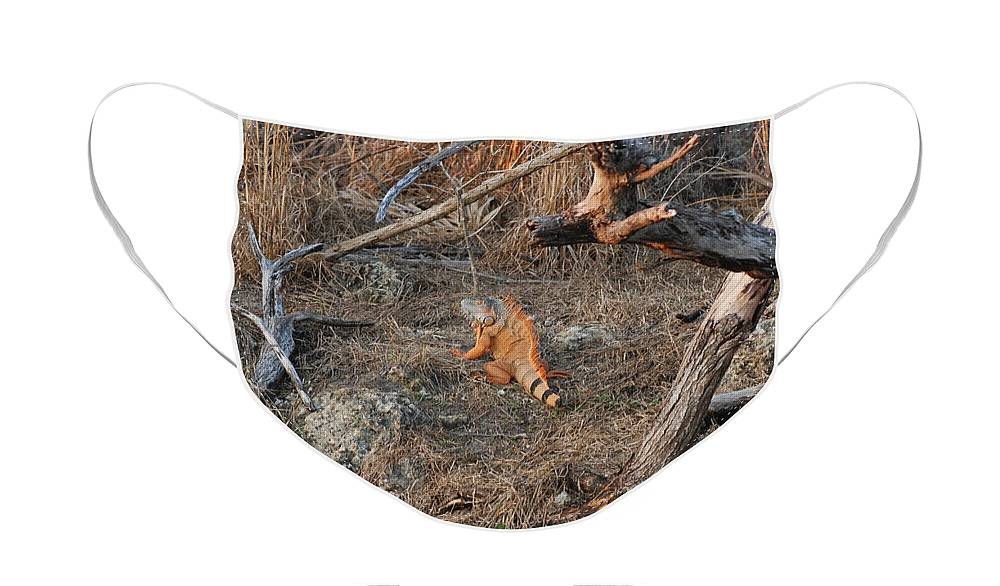 Branches Face Mask featuring the photograph The Orange Iguana by Rob Hans