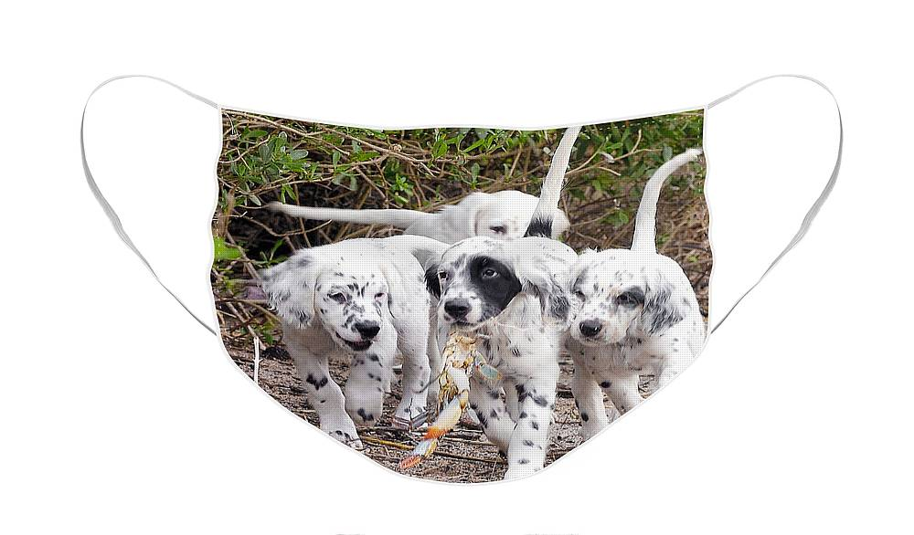English Setter Face Mask featuring the photograph The Puppy's Prize by Scott Hansen