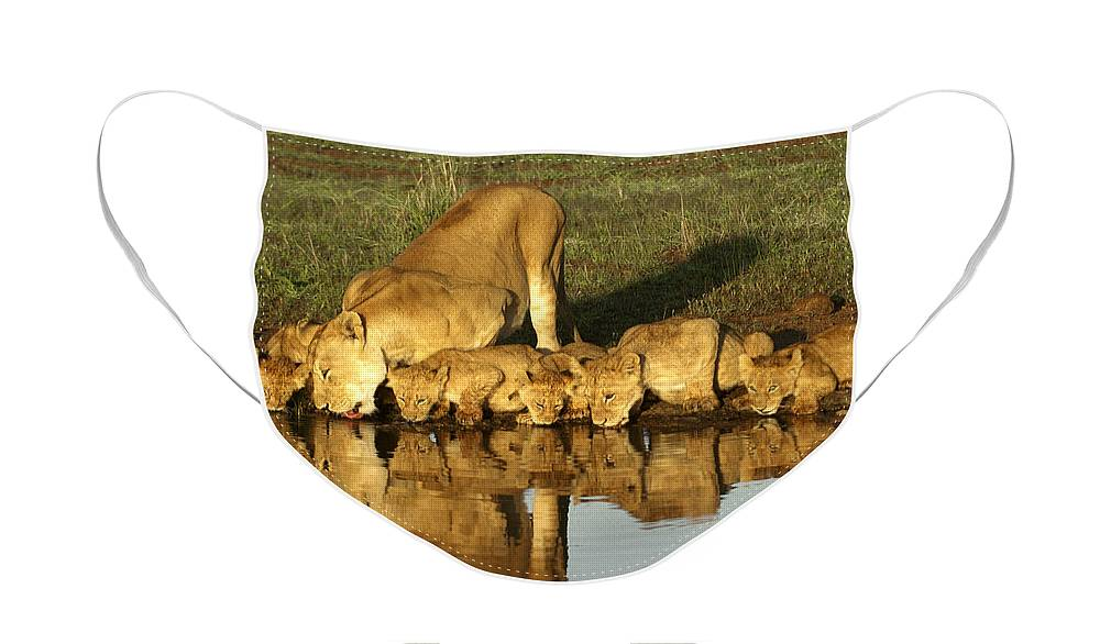 Lion Face Mask featuring the photograph Thirsty Lions by Michele Burgess