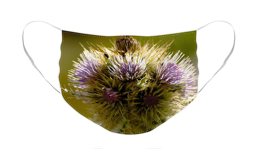 Thistles Face Mask featuring the photograph Thistles by Richard Henne