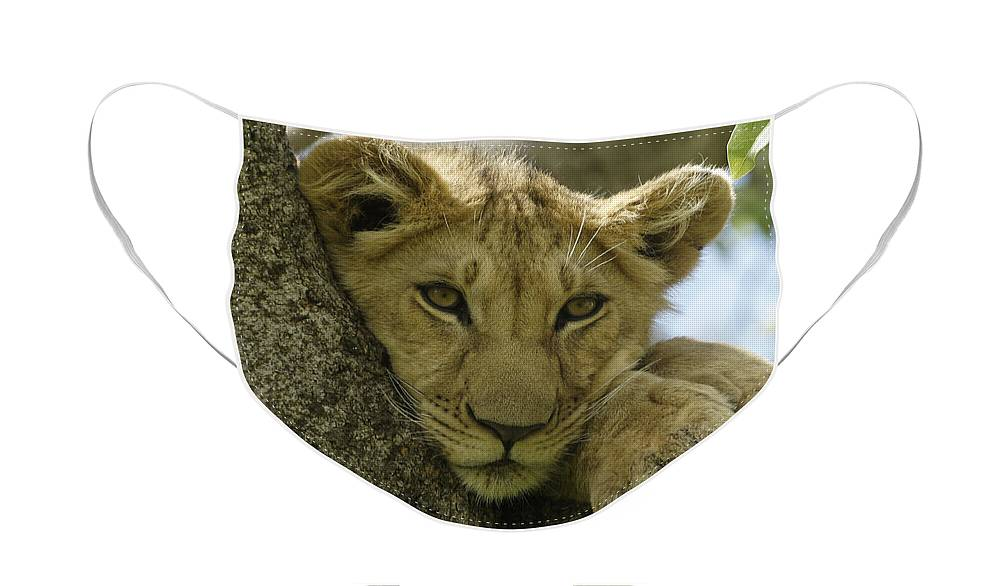 Africa Face Mask featuring the photograph Time for a Nap by Michele Burgess
