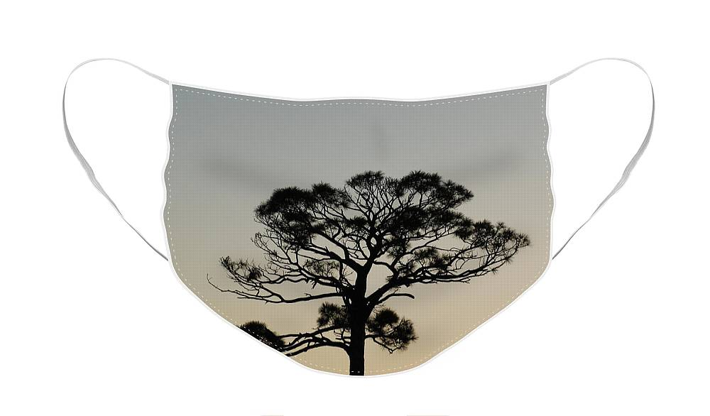 Tree Face Mask featuring the photograph Trees In Sunset by Rob Hans