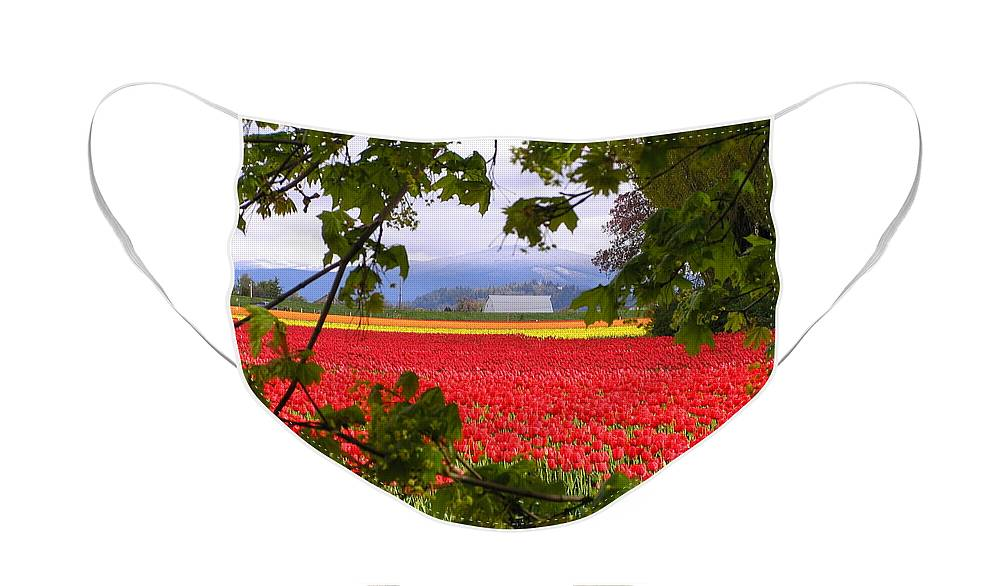 Tulip Face Mask featuring the photograph Tulips Secret Window by Louise Magno