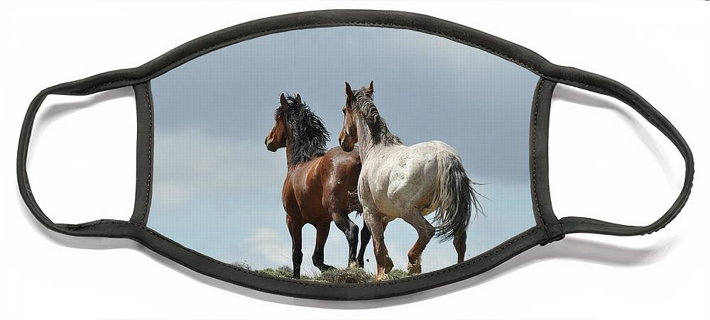 Wild Horses Face Mask featuring the photograph We Will Be Over the Hill in a Few Seconds by Frank Madia