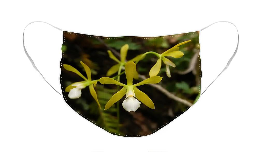 Orchid Face Mask featuring the photograph White Butterfly Orchid by Rich Leighton
