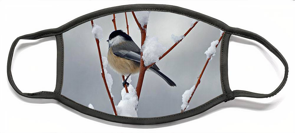 Berry Face Mask featuring the photograph Winter Chickadee by Diane E Berry