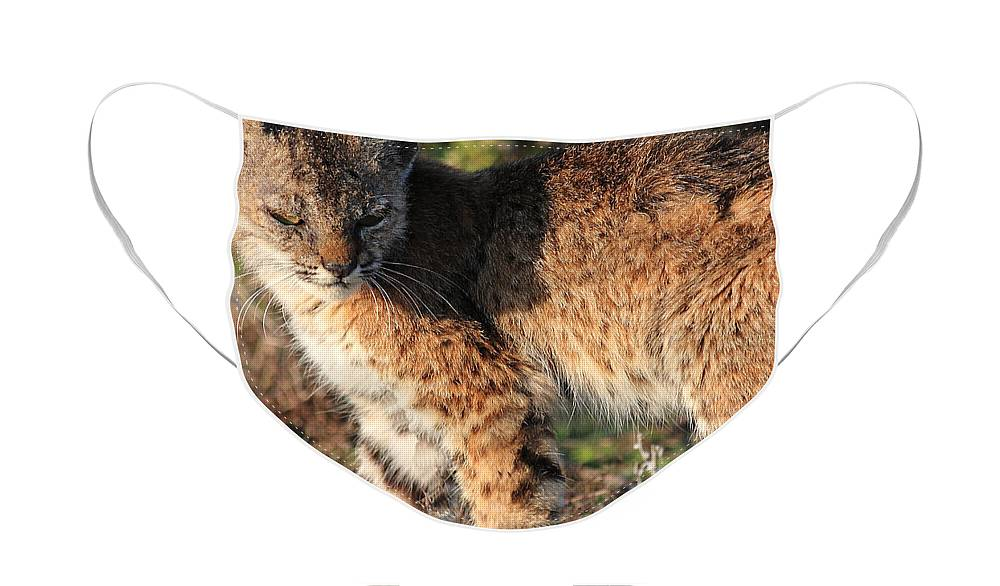 Animal Face Mask featuring the photograph Young Bobcat 01 by Wingsdomain Art and Photography