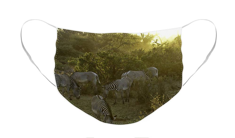 Africa Face Mask featuring the photograph Zebras in a Glen by Michele Burgess