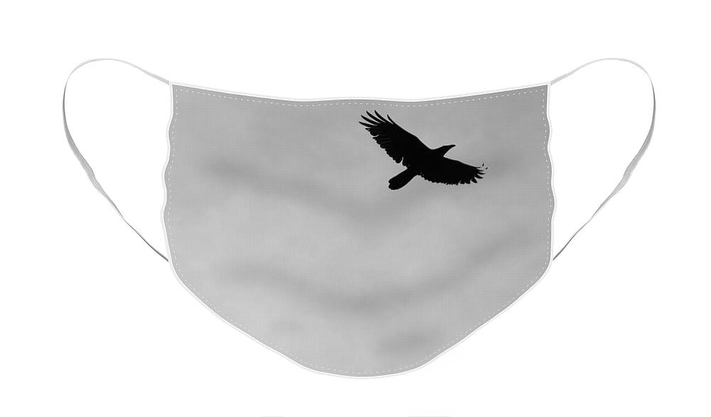 Soft Blue Face Mask featuring the photograph Black and White Raven In Flight 2 by Colleen Cornelius