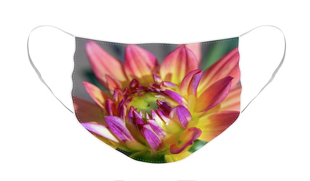 Dahlia Flowers Face Mask featuring the photograph Close up of Pink and Yellow Dahlia by Barbara Rogers