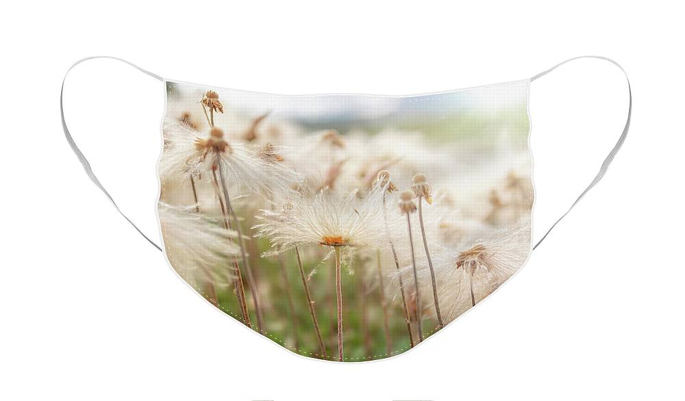 Pasque Face Mask featuring the photograph Pasqueflower seed heads by Delphimages Photo Creations