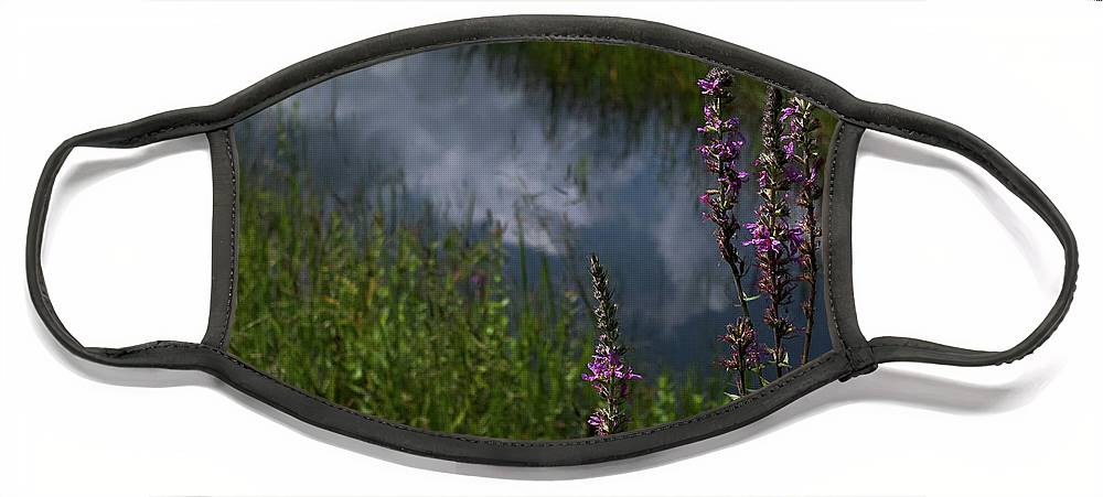 Purple Loosestrife Face Mask featuring the photograph Purple Daydream by Jerry LoFaro
