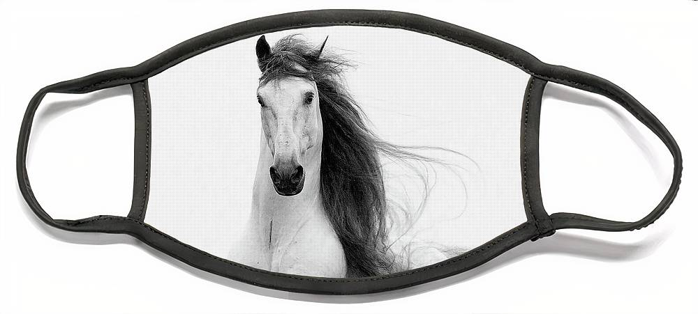 Horse Face Mask featuring the photograph Stallion's Glory by Carol Walker