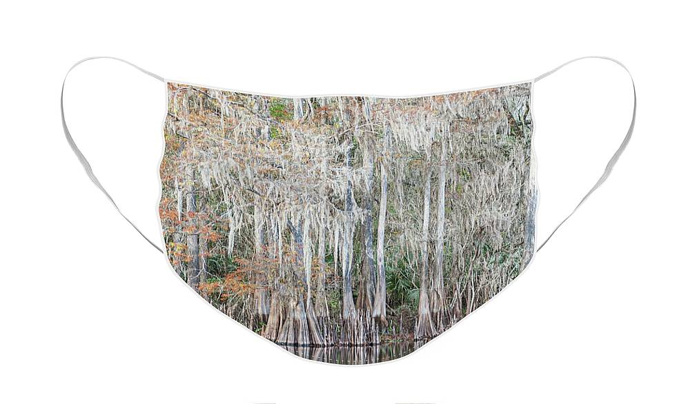 Bald Cypress Trees Face Mask featuring the photograph Winter Cypress by Steven Sparks