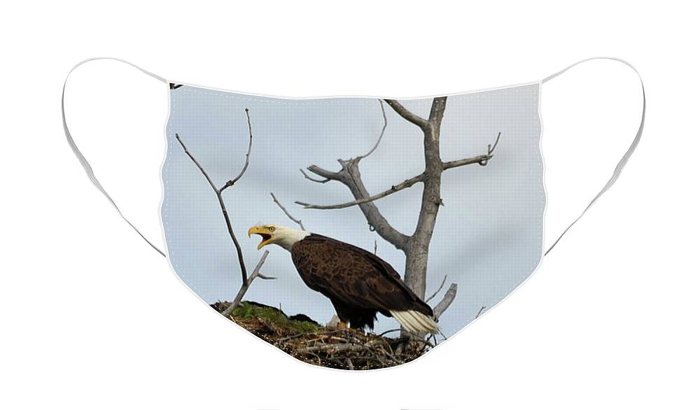 American Bald Eagle Face Mask For Sale By Whispering Peaks Photography