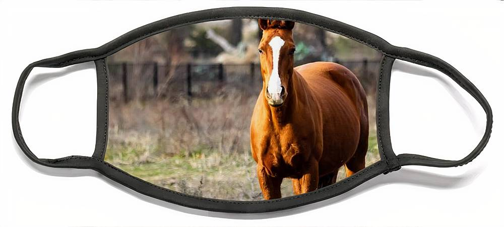 Horse Face Mask featuring the photograph Bay Horse 3 by C Winslow Shafer