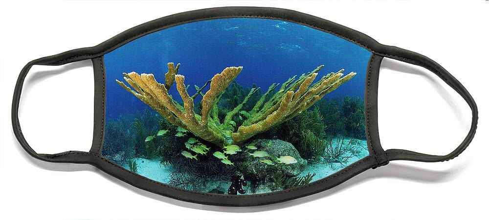 70007084 Face Mask featuring the photograph Elkhorn Coral by Hans Leijnse