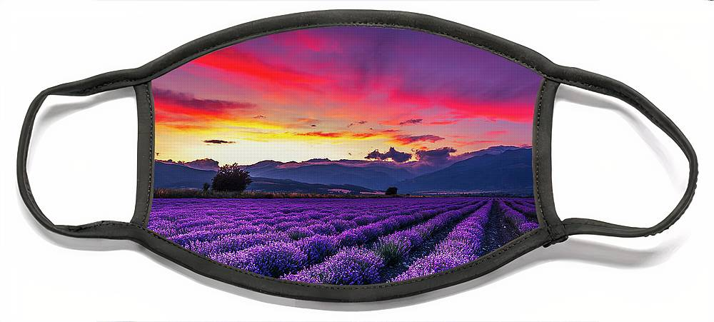 Dusk Face Mask featuring the photograph Lavender Season by Evgeni Dinev