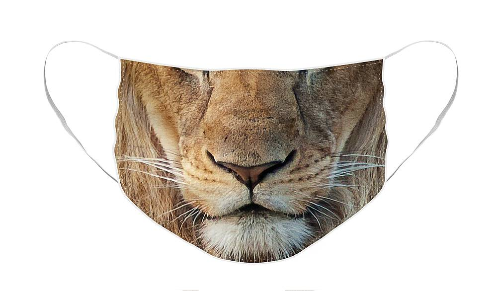 Lion Face Mask featuring the photograph Lion by Steven Sparks