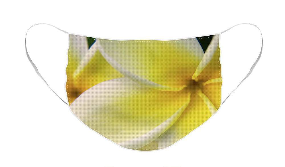 Nature Face Mask featuring the photograph Plumeria Flowers by Julia Hiebaum