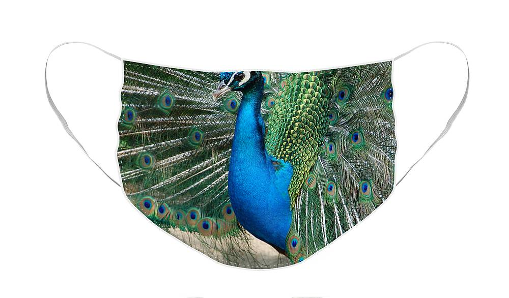 Peacock Face Mask featuring the photograph Profilin' by Suzanne Gaff