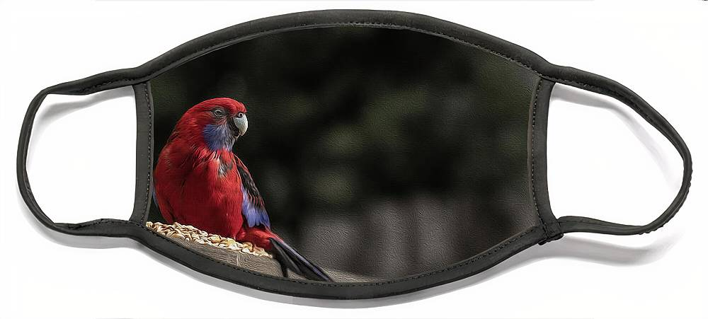 Rosella Face Mask featuring the photograph Rosella 1 by Leigh Henningham