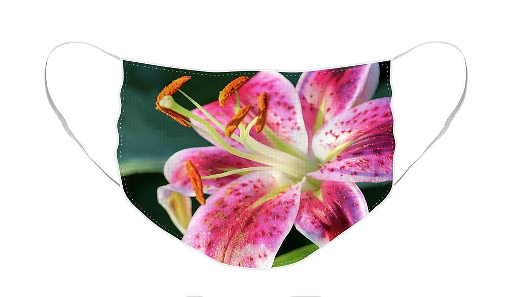 Macro Face Mask featuring the photograph Stargazer Lily in Summer Sunshine by Carol Groenen