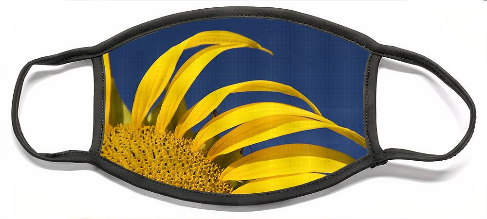 3scape Face Mask featuring the photograph Sunflower by Adam Romanowicz