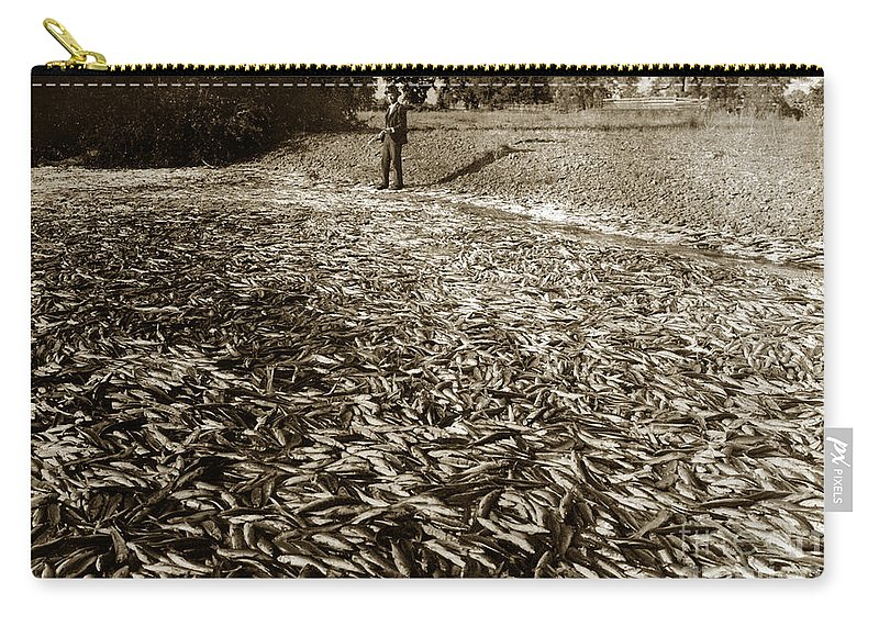 A Run Of Squawfish Stranded In Kelsey Creek Near Kelseyville Carry-all Pouch featuring the photograph A Run Of Squawfish Stranded In Kelsey Creek Near Kelseyville Lake County April 29 1899 by California Views Archives Mr Pat Hathaway Archives
