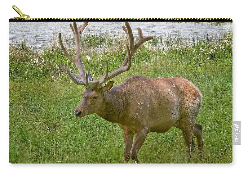 Animals Carry-all Pouch featuring the photograph Elk At Pond Edge by David and Carol Kelly