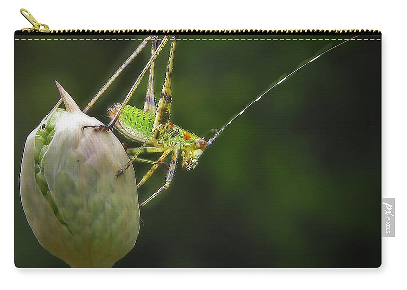 Close Up Carry-all Pouch featuring the photograph Katydid by David and Carol Kelly