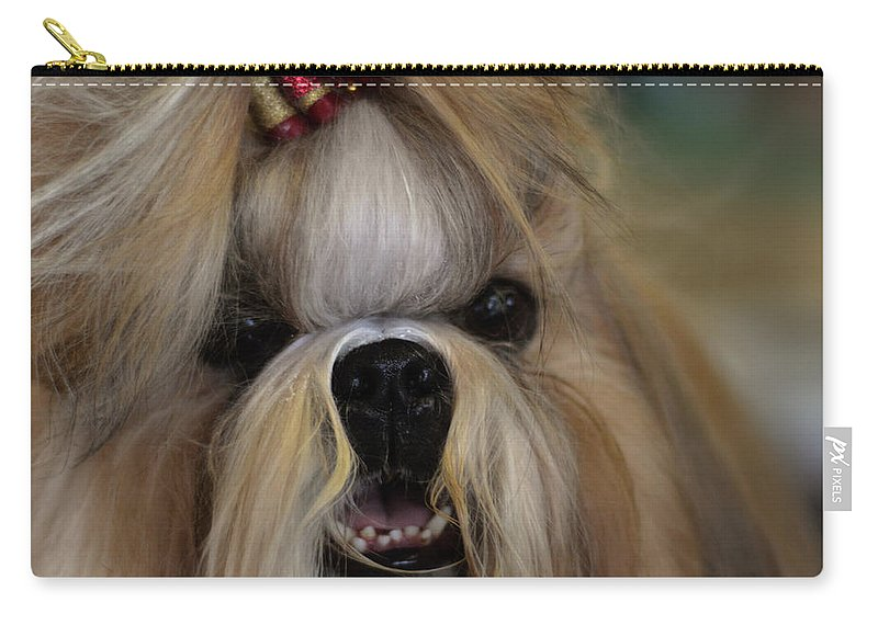 Adorable Carry-all Pouch featuring the photograph Lhasa Apso by TouTouke A Y