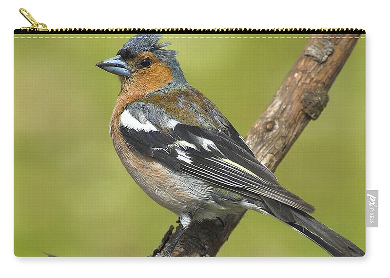 Birds Carry-all Pouch featuring the photograph Male Chaffinch by Guido Montanes Castillo