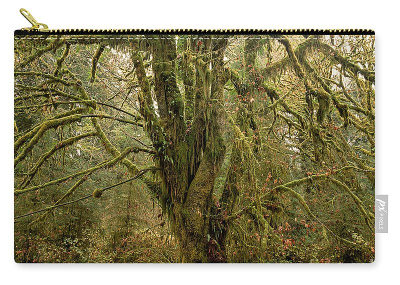 Moss-covered Tree Carry-all Pouch featuring the photograph Moss-covered Big Leaf Maple Tree by Tracy Knauer