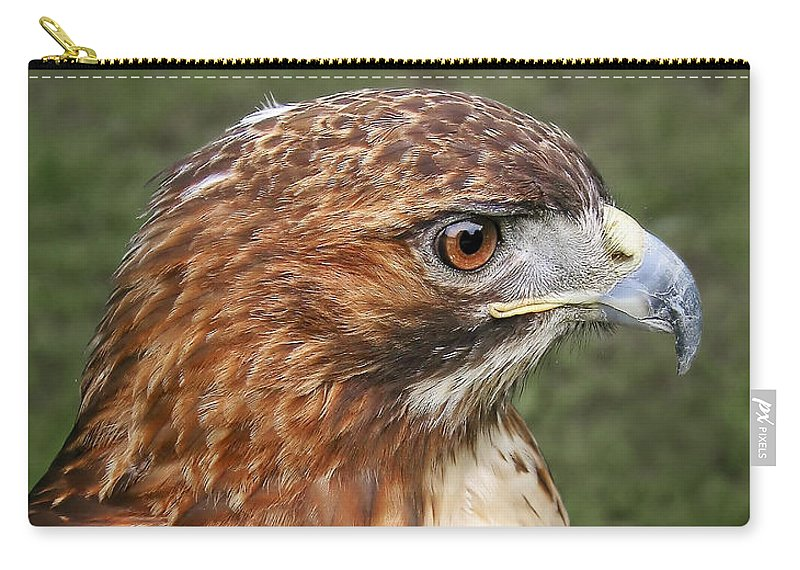 Animals Carry-all Pouch featuring the photograph The Look Of A Predator by David and Carol Kelly