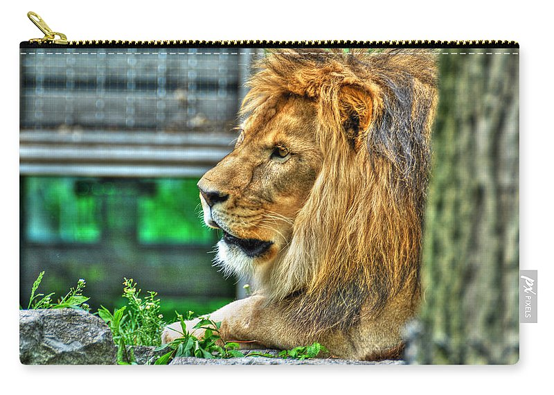 Lion Carry-all Pouch featuring the photograph 002 Lazy Boy At The Buffalo Zoo by Michael Frank Jr
