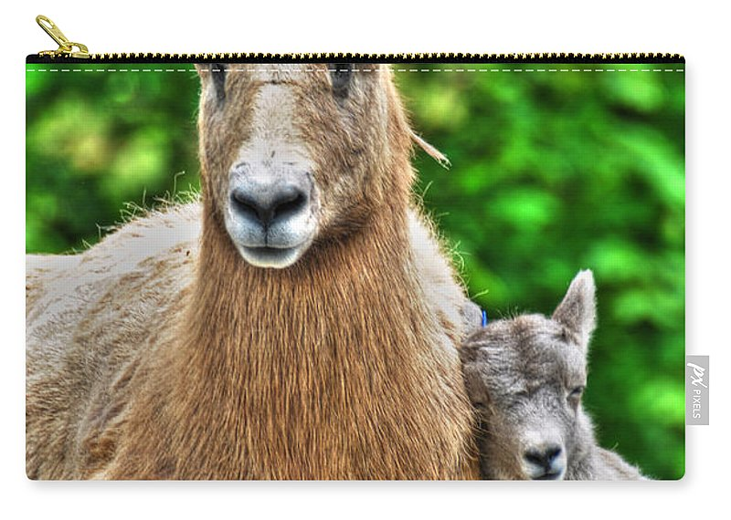 Goats Carry-all Pouch featuring the photograph 002 Nap Time At The Buffalo Zoo by Michael Frank Jr
